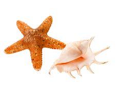 Free Single Shell & Shellfish. Royalty Free Stock Images - 10278489