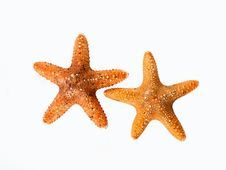 Free Two Shellfish. Royalty Free Stock Photos - 10278518