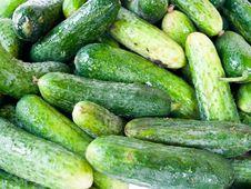 Free Green Cucumbers. Stock Photo - 10278680