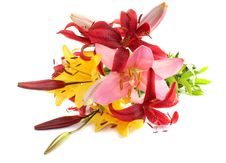 Free Lilies Royalty Free Stock Images - 10279509