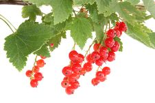 Branch A Currant