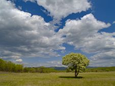 Free The Solitary Flowering Tree And Cloudy Sky Stock Images - 10279564