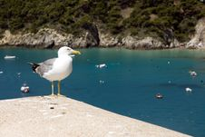 Free Seagull Royalty Free Stock Photography - 10279737