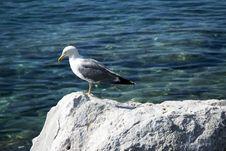 Free Seagull Stock Photos - 10279743