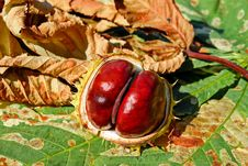 Free Natural Foods, Local Food, Food, Chestnut Stock Photos - 102707073