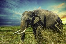 Free Elephant, Elephants And Mammoths, Wildlife, Indian Elephant Royalty Free Stock Photography - 102707277