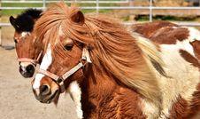 Free Horse, Horse Like Mammal, Mane, Bridle Stock Images - 102707924