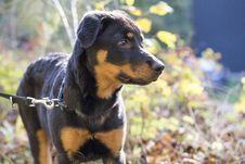 Free Dog, Dog Like Mammal, Dog Breed, Mammal Royalty Free Stock Photos - 102708158