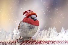 Free Snowman, Beak, Bird, Snow Stock Photo - 102708290