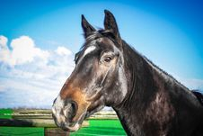 Free Horse, Halter, Bridle, Fauna Stock Images - 102708534