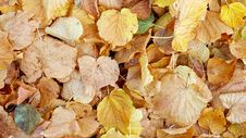 Free Leaf, Autumn, Deciduous Royalty Free Stock Images - 102708589