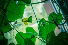 Free Cucumber Seedlings On The Window Retro Stock Photos - 102777553