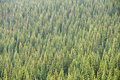 Free Coniferous Forest Royalty Free Stock Image - 10287006