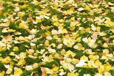 Free Texture Of Fallen Leaves Stock Photo - 10280700