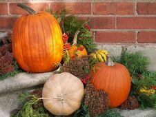 Free Fall Pumpkin Arrangement Stock Images - 10281334