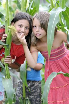 Free Girls In Corn Field Royalty Free Stock Photography - 10281567