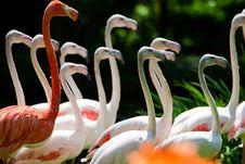 Free Flamingos Stock Photos - 10281683
