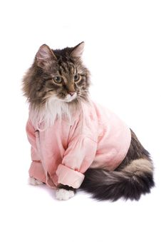 Free Cat Clothed Pink Bathrobe. Royalty Free Stock Photography - 10282687