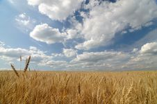 Free Golden Field Stock Photography - 10283272