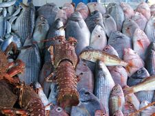 Free Morocco Fish Royalty Free Stock Photos - 10283608