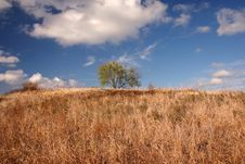 Free Lone Tree On A Dried Out Hill Stock Images - 10284594