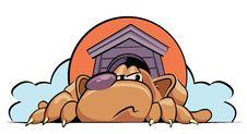 Free Dog Royalty Free Stock Image - 10284836