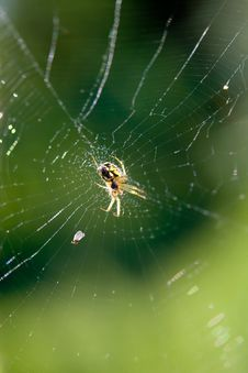 Free Spider Stock Photo - 10286120