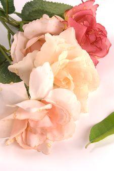 Free Fake Material Roses Stock Photos - 10287603