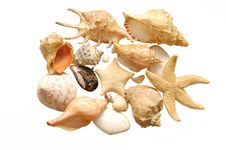 Image Of Seashells On White Background Royalty Free Stock Image