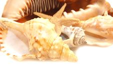 Free Photo Of A Variety Of Seashells Royalty Free Stock Images - 10287759