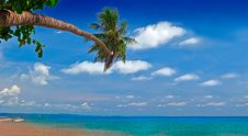 Free Sea, Sky And Palm Stock Photos - 10289453