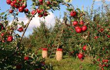 Free Fruit, Tree, Plant, Fruit Tree Stock Photo - 102876320