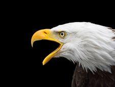 Free Bird, Beak, Bird Of Prey, Eagle Royalty Free Stock Image - 102876406