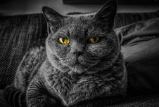 Free Cat, Whiskers, Black, Black And White Royalty Free Stock Photo - 102877205