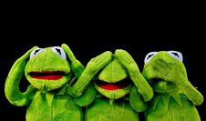 Free Green, Vertebrate, Frog, Amphibian Stock Images - 102879794