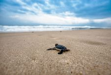Free Sea, Sea Turtle, Sky, Turtle Royalty Free Stock Photo - 102882015