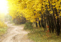 Free Autumn In The Park Royalty Free Stock Photos - 10292368