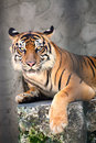 Free Tiger Stock Photography - 10292892