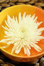 Free White Chrysanthemum In  Bowl With Water. Royalty Free Stock Photography - 10294217