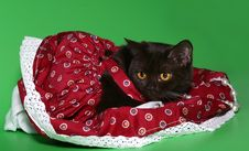 Free Black Cat In A Red Dress. Stock Photo - 10292970