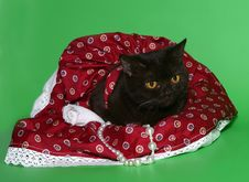 Free Black Cat In A Red Dress. Stock Photo - 10293000