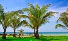 Free Palms On The Beach Royalty Free Stock Photography - 10294817