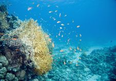 Free Coral And Fish Royalty Free Stock Photography - 10295337