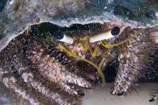 Free Hermit Crab Stock Images - 10295954
