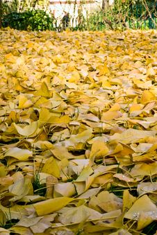 Free Autumn Royalty Free Stock Photography - 10296077