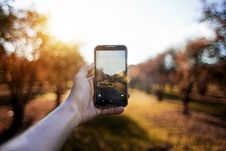 Free Blur, Blurry, Bright, Camera, Royalty Free Stock Images - 102998299