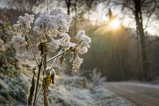 Free Branches, Close, -up, Cold Stock Photos - 102998333