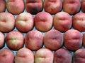 Free Peaches, Yellow Ones Royalty Free Stock Photo - 1033365