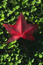 Free Red Leaf With Dew Royalty Free Stock Image - 1039486