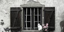 French Windows II Stock Image